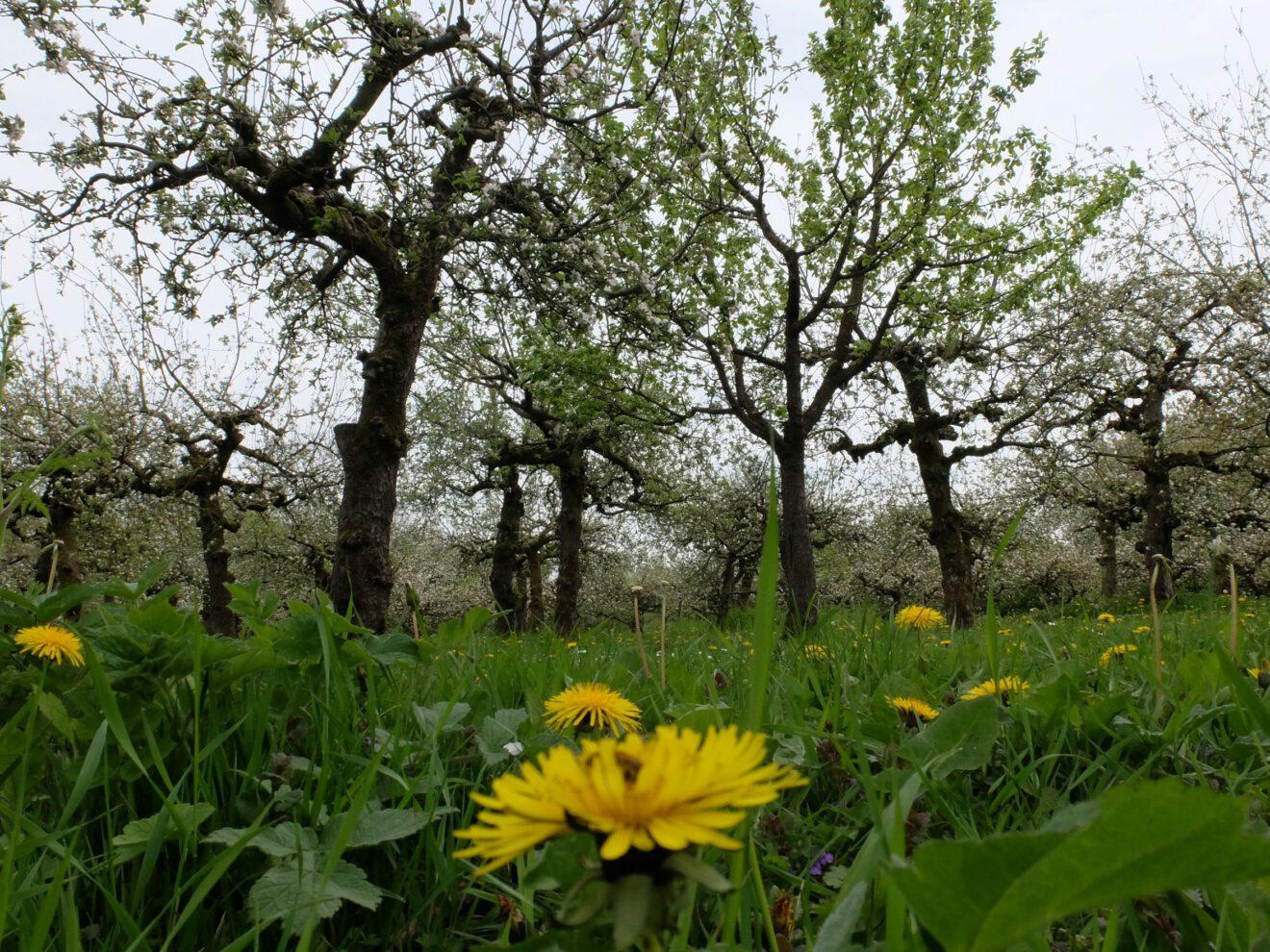 4x3 boomgaarden en bijen LR