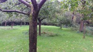 Oude boomgaard Huis de Kemnade