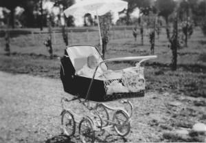 Voor de nieuwe laagstamboomgaard in de kinderwagen