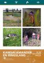 afbeelding_Kamsalamanders-1_klein