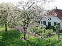 bloesem 2007 085