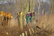 natuurwerkgroep_de_groene_knoop_knotten_oude_ijssel