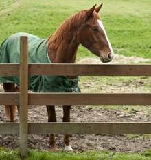 paard_achter_hek